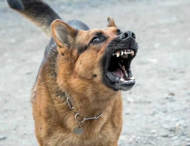 Why do dogs bark.jpg