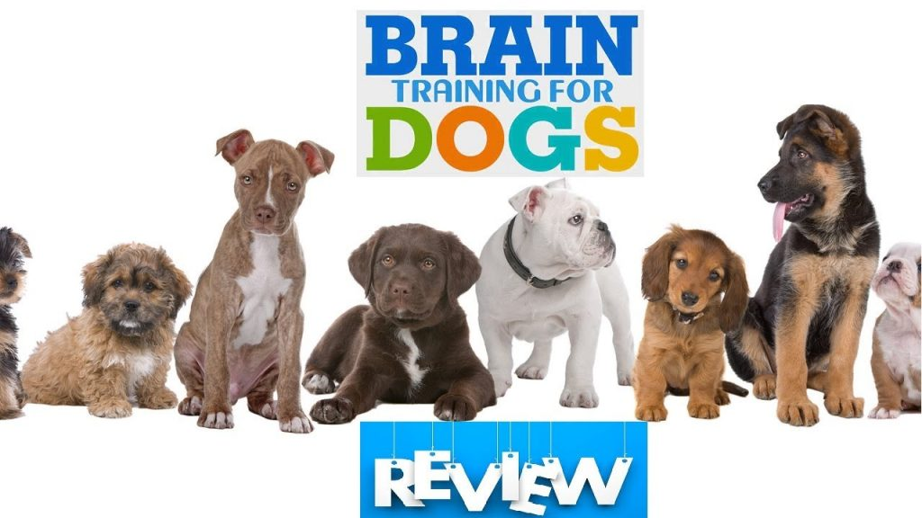 brain training for dogs reviews.jpeg