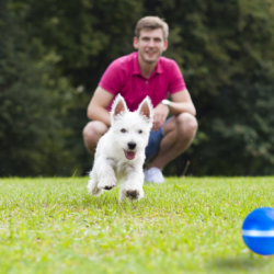 Barx Busyball Review 2021: Is this Barxbuddy Busyball best for my dog?